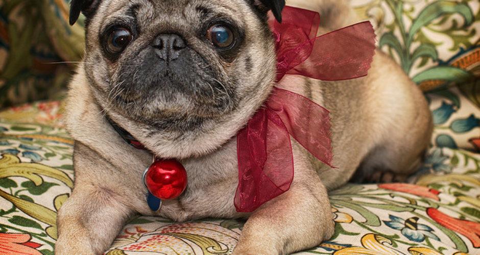 Hund juletøj - alexbrn - flickr